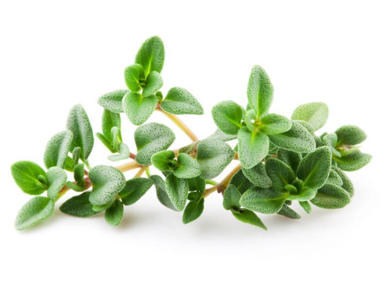 Il Timo vantaggi e benefici di un aroma unico in cucina e ...